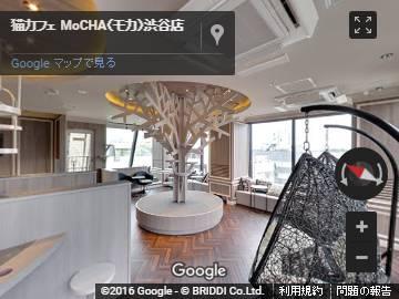 猫カフェ MoCHA(モカ)渋谷店